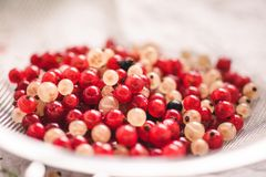 Close up of white and recd currant berries. In a sieve royalty free stock photo