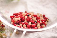 Close up of white and recd currant berries. In a sieve royalty free stock photography