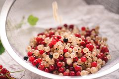 Close up of white and recd currant berries stock image