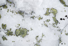 Close-up of the white rock with green moss or lichen Stock Images