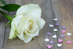 Close up of a white rose and colored heart candies Stock Photos
