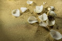 White rose petals on gold dust background. Close-up of white rose petals on gold dust background stock photos