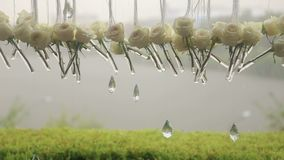 Close-up of white roses and crystals in the rain. stock footage