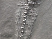 Close-up white stitch. Over old decayed tent material Royalty Free Stock Photos