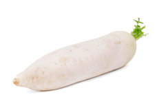 Close-up of a white turnip, isolated on a white background. Summer nutritious vegetables for healthy diets. Close-up of a white turnip, isolated on a white royalty free stock image