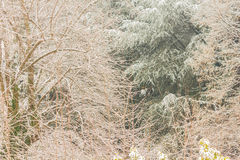 Close-up of a white winter landscape. View of snow covered trees Stock Images