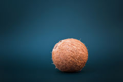 Close-up of a whole hawaiian coconut, on a dark emerald background. Fresh, whole and bright brown coconut. Healthy coconuts. Royalty Free Stock Photo