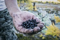 Close up of wild berries on a man`s hand royalty free stock photography