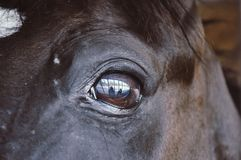 Close up on wild brown horse eye. Royalty Free Stock Photo