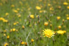 Close up wild flowers in the green meadow Stock Images