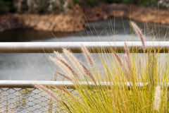 Close up of wild grass growing at the fence Royalty Free Stock Image