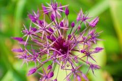Purple flower - detail stock photo