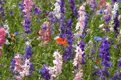 Close Up Wildflowers. Texas wildflowers Royalty Free Stock Photo