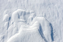 Close up of windy snow surface texture. Winter background royalty free stock image
