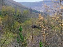 Welsh mountain landscape of trees and bushes with large stones Stock Photos