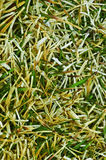 Close up of winter grass Royalty Free Stock Photos