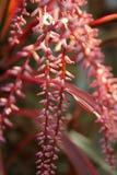 Close-up witte bloem op groene bladeren, Cordyline-fruticosa Royalty-vrije Stock Afbeelding