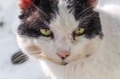 Close-up Witte en Zwarte Cat Head royalty-vrije stock foto's