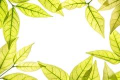 Close-up witte ruimte op het centrum van kader door bruine die bladeren op witte achtergrond wordt geïsoleerd Royalty-vrije Stock Foto's