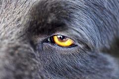 Close up of a wolf Stock Photos