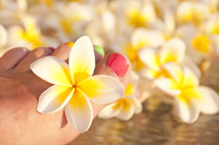 Close up on woman bare foot with flowers Stock Photos