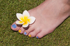 Close up on woman bare foot with frangipani flower Stock Images