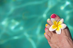 Close up on woman bare foot with frangipani flower Royalty Free Stock Photo