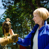 Close-up of a woman and a captive falcon at a wild bird sanctuary. Royalty Free Stock Image