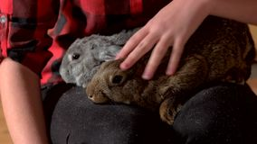 Close up woman caressing rabbit. stock footage