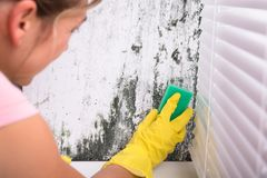 Woman Cleaning Mold From Wall royalty free stock photo