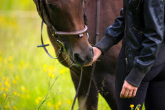 Close-up of woman feeding her arabian horse with snacks in the field Stock Photography