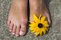 Close-up of woman feet with flower between toes.  Stock Image