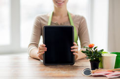 Close up of woman or gardener with tablet pc. People, gardening, flowers and profession concept - close up of happy woman or gardener showing tablet pc computer Stock Image
