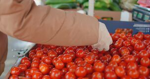 Close-up: a Woman in gloves buys tomatoes at the market in quarantine mode. Coronavirus buying vegetables and fruits
