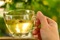 Close up woman hand holding a cup of tea. Natural background Royalty Free Stock Photography