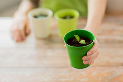 Close up of woman hand holding pot with sprout Stock Photo