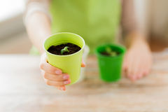 Close up of woman hand holding pot with sprout Royalty Free Stock Photos