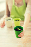 Close up of woman hand holding pot with sprout Stock Photography