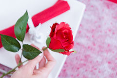Close up of woman hand holding rose Stock Photo
