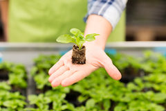Close up of woman hand holding seedling sprout Royalty Free Stock Images