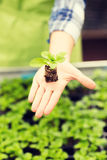 Close up of woman hand holding seedling sprout Royalty Free Stock Photos