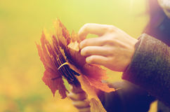 Close up of woman hands with autumn maple leaves. Season, nature and people concept - close up of woman hands with autumn maple leaves Stock Photography