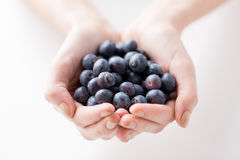 Close up of woman hands holding blueberries Stock Images