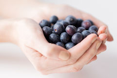 Close up of woman hands holding blueberries Stock Photo