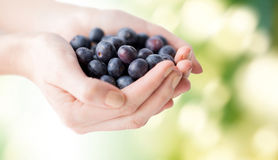 Close up of woman hands holding blueberries Stock Photos