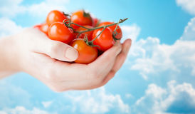 Close up of woman hands holding cherry tomatoes Royalty Free Stock Images