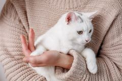 Female arm with domestic pet Royalty Free Stock Photo