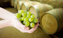 Close up of woman hands holding green grape bunch Royalty Free Stock Images