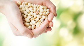 Close up of woman hands holding peeled peanuts Royalty Free Stock Images