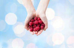 Close up of woman hands holding raspberries. Healthy eating, dieting, vegetarian food and people concept - close up of woman hands holding ripe raspberries over Royalty Free Stock Photo